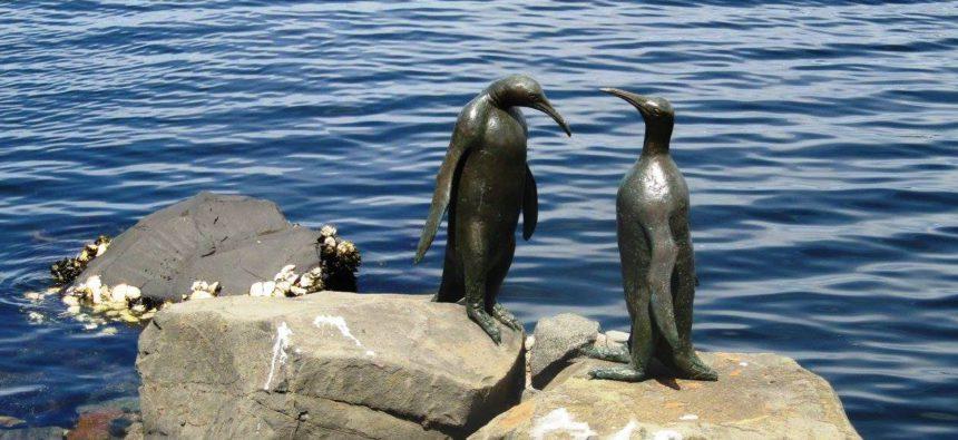 tučňáci - tasmánie