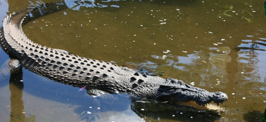 cairns-crocodile farm